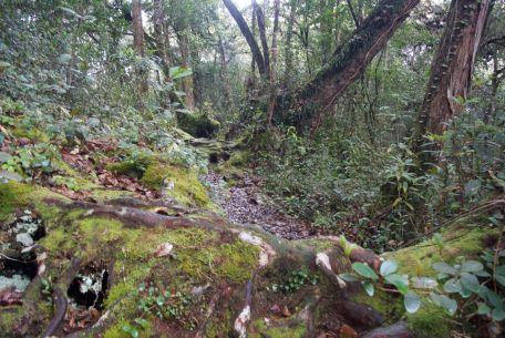 CH trail